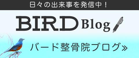 BIRD整骨院のブログ